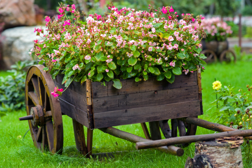 Gardening Tips City of Duncanville Texas USA